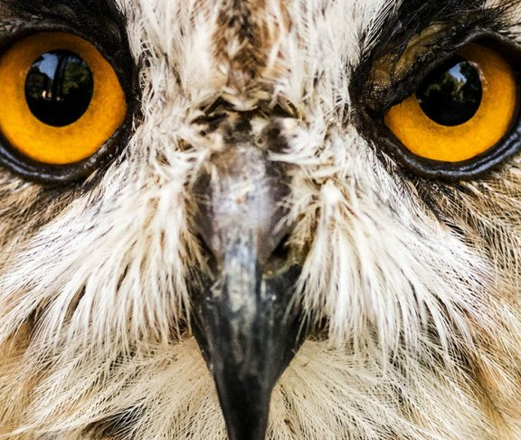 Biological Differences Between Night Owls and Early Birds
