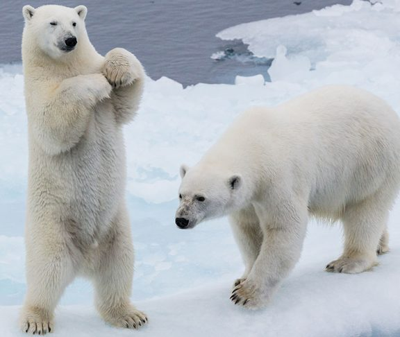 Polar Bears Aren't Left Handed (and 9 Other Things You ...