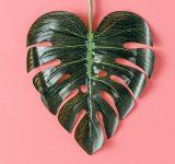 liść w kształcie serca na różowym tle