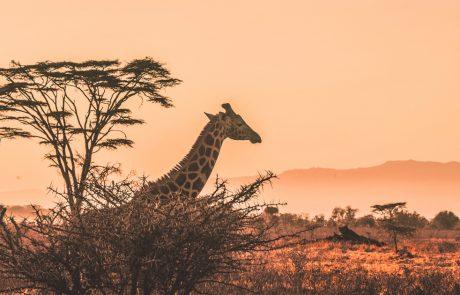 mahdollisuuksien-mantere-afrikka