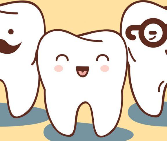 Illustrations of three teeth