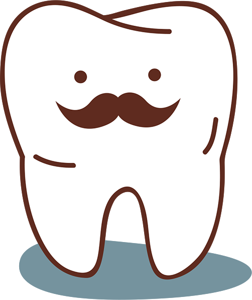 Adult tooth illustration