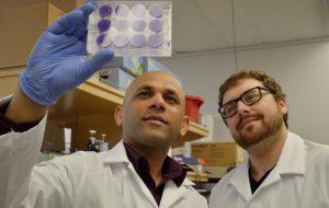 Scientists at a BHCRI lab