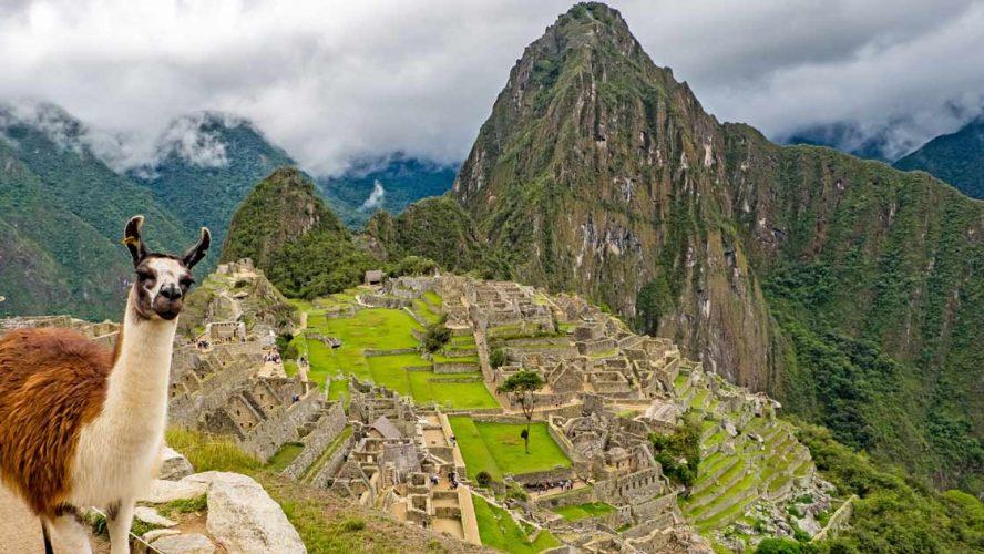 Llamas at Machu Piccu in Peru