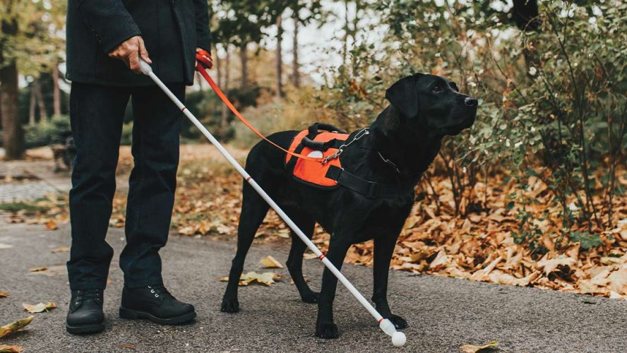 Person using a white cane and a guide dog