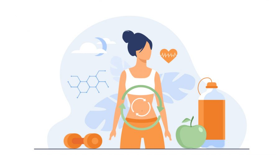 Illustration of a woman's metabolic system