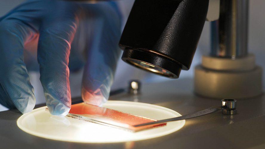 Medical scientist studying blood sample