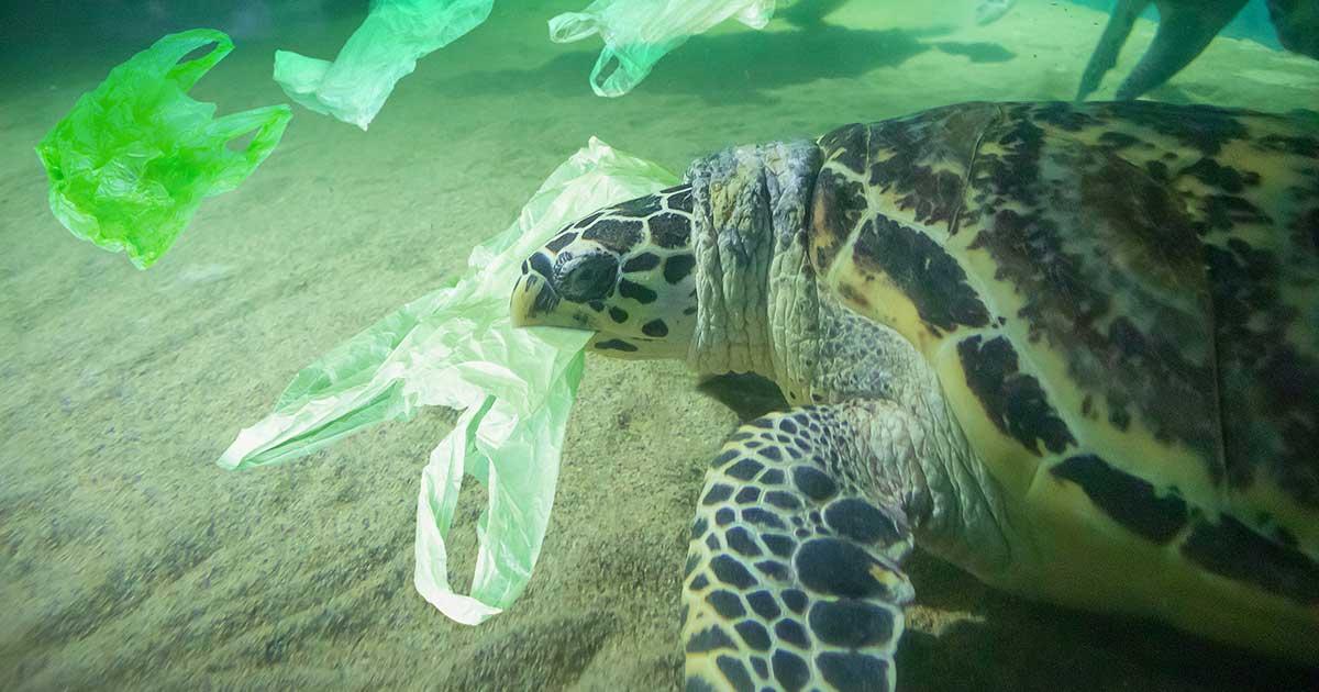 Sea turtle biting down on a plastic bag underwater