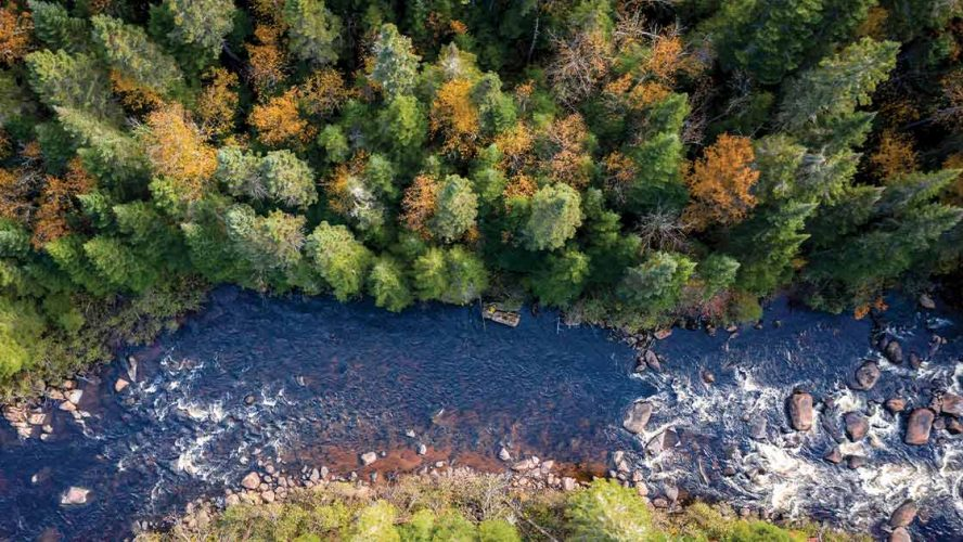 Aerial view of Boreal forest in Quebec