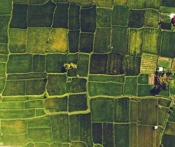 Agricultural Innovation header