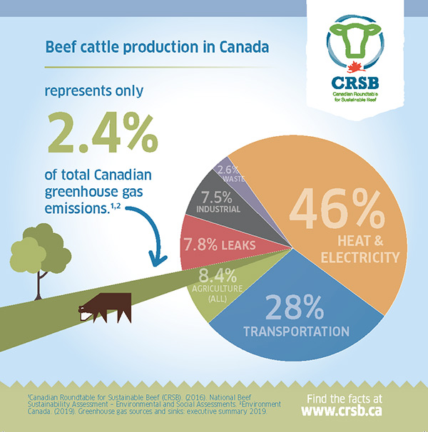 Beef cattle production in Canada infographic