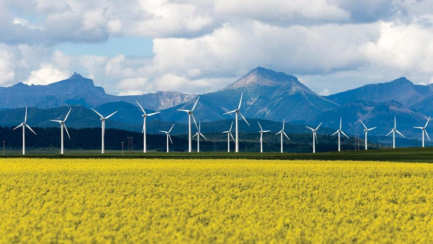 Canola field, wind farm, and mountains