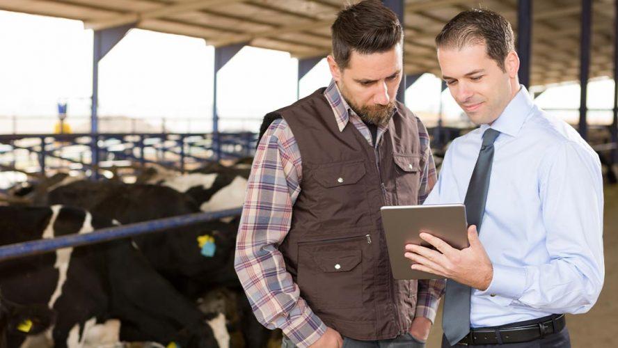 Farmer and businessman meeting on a dairy farm