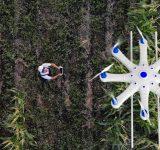 Farmer spraying crops with drone