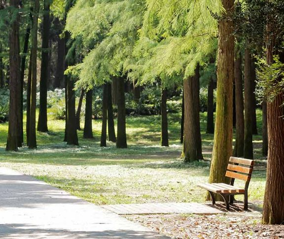 Park bench surrounded by trees