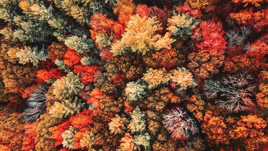 Aerial view of a Canadian forest in the fall