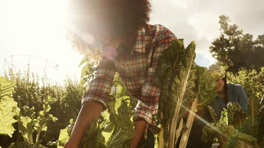 Happy woman pulling a leafy vegetable in a field