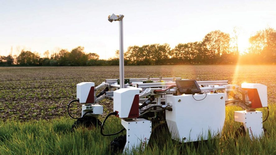 Robot in a field of crops