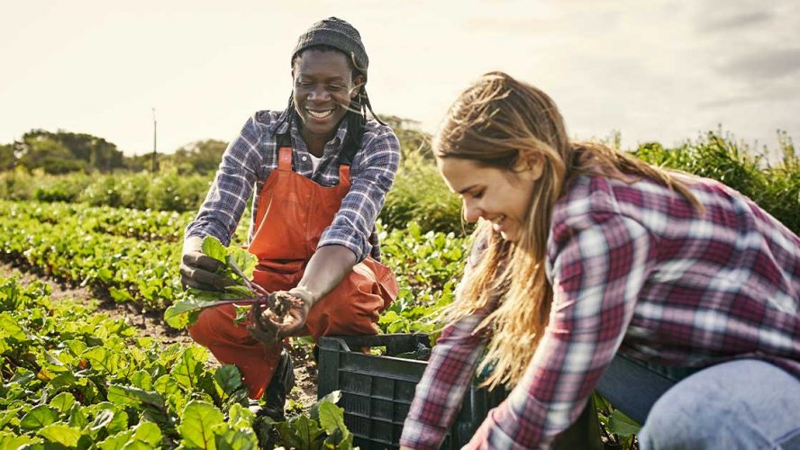 Two millenials smiling and harvesting crops at a farm
