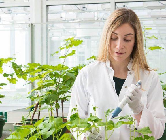Agriculture scientist working on a plant in a greenhouse