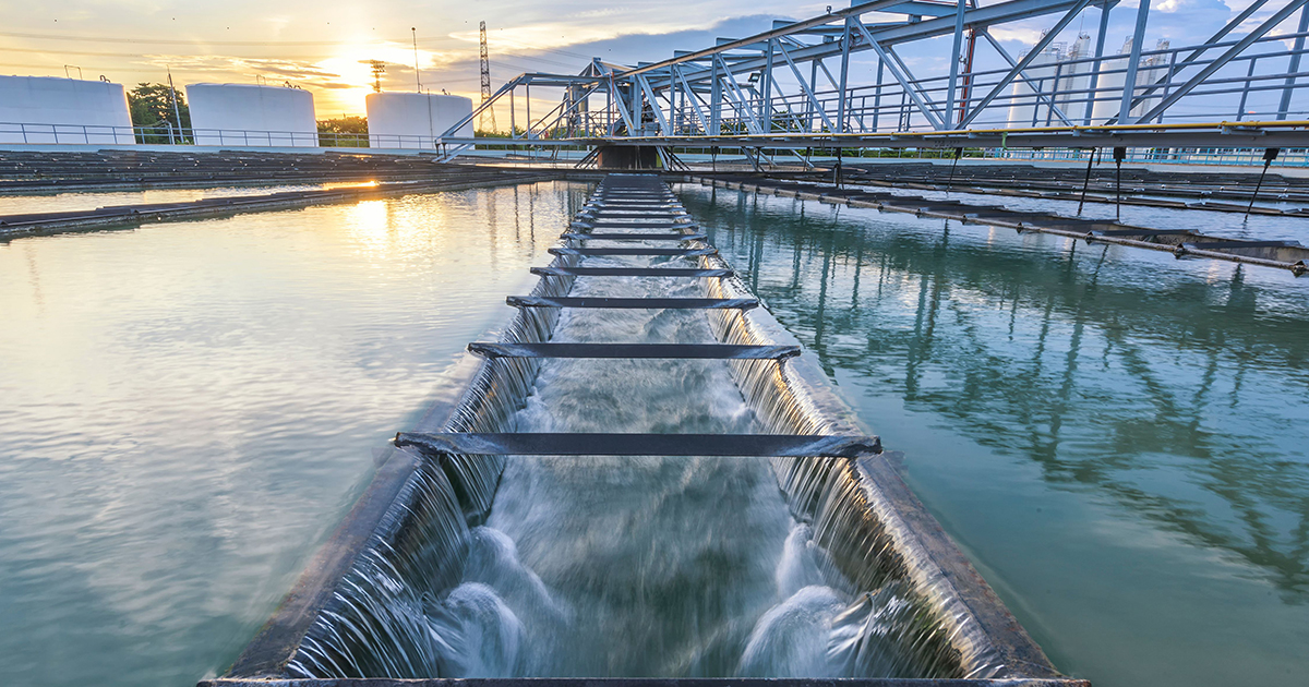 Water plant and sunset