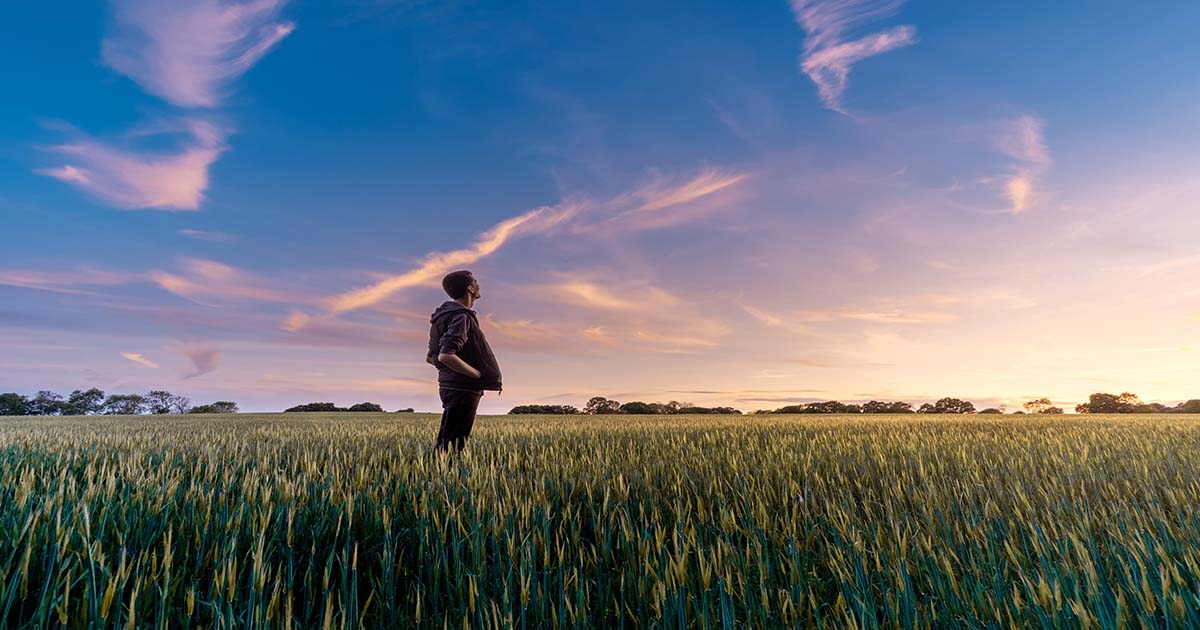Man in a Field Gazing Out at the Sunset beneath a Nearly Cloudless Sky