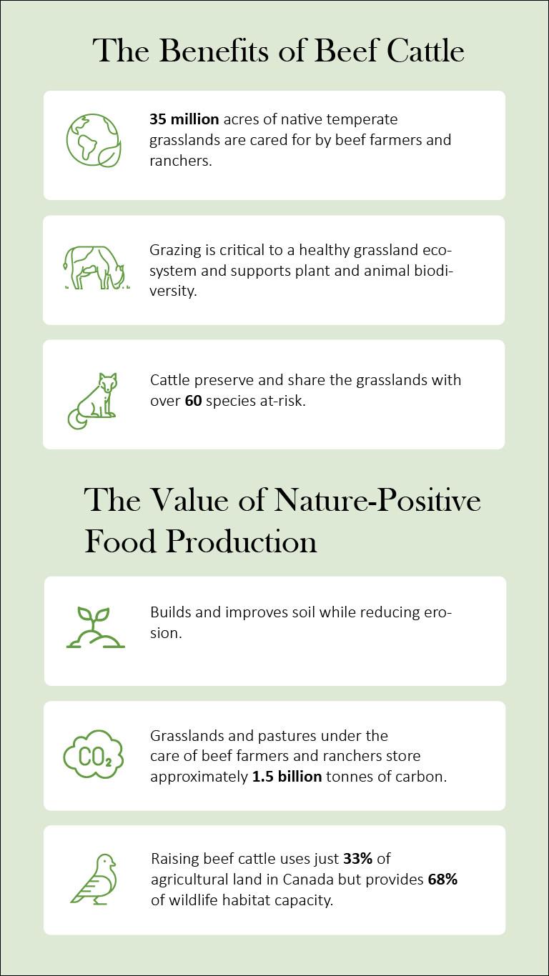 infographic benefits of beef cattle