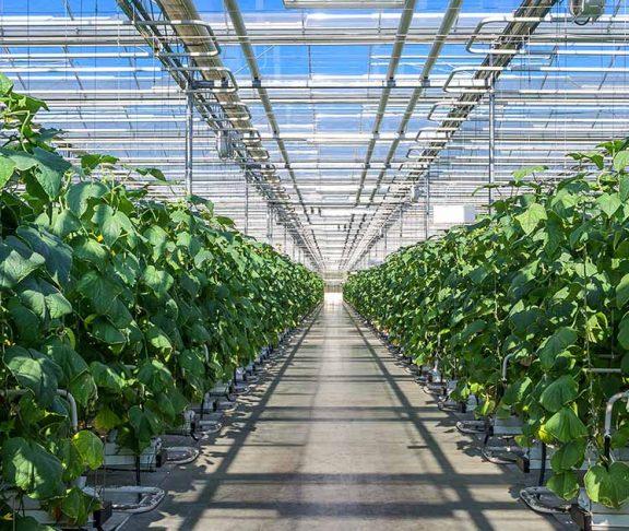 ontario greenhouse