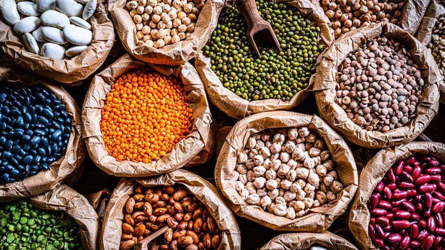 protein ingredients industries