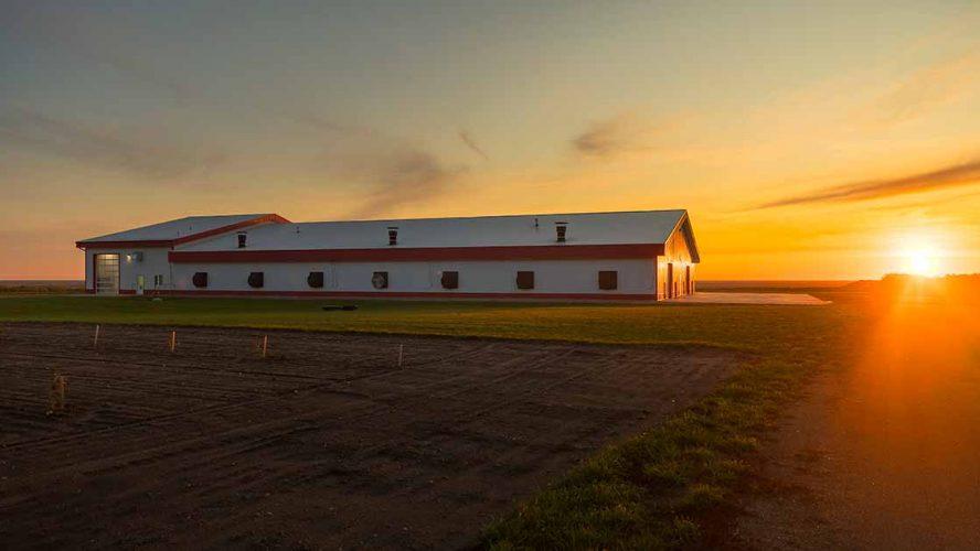 white barn chicken farmers