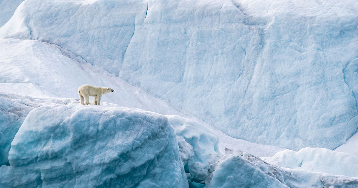 polar bear eco canada
