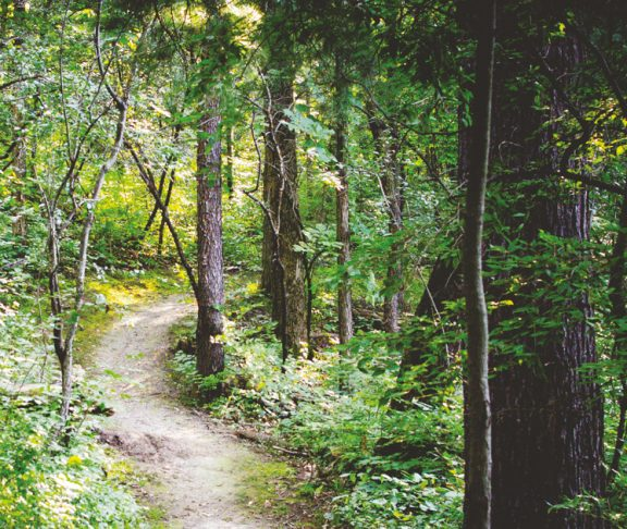 A Swedish Forest.