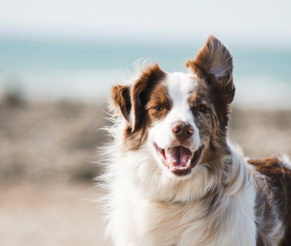 hitta din hund minifinder