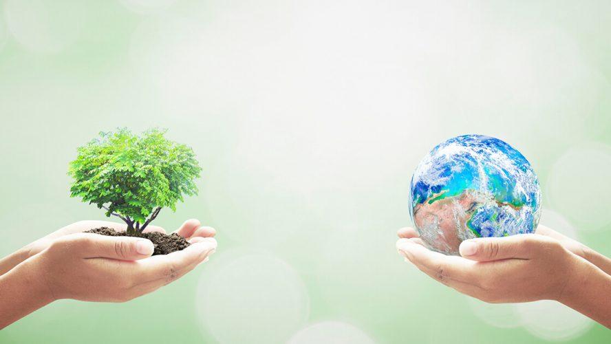 Hænder holder henholdsvis et lille træ og en lille globe