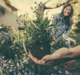 trädgårdsmästare och växt