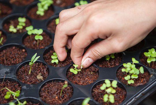 Framtidens mat - odla