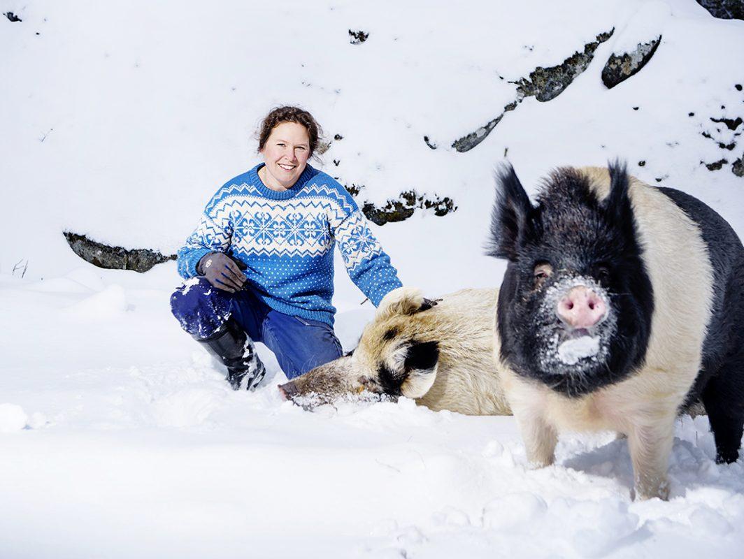 Pella med två stycken lurviga grisar.