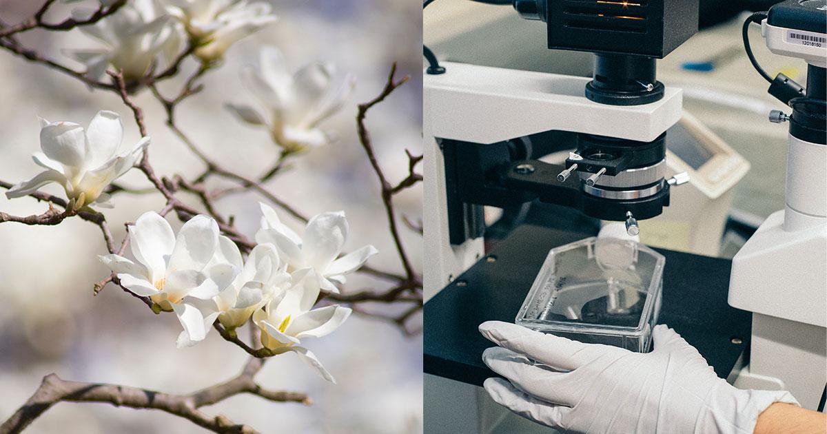 blommor pollen forskning