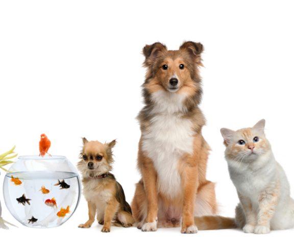 Welches Haustier passt zu mir? Die 5 häufigsten Haustiertypen!