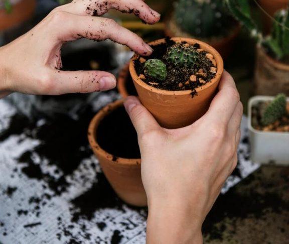 planter på arbejdspladsen