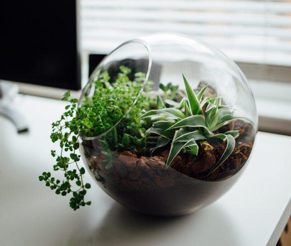 kwiaty w szklanej doniczce na biurku