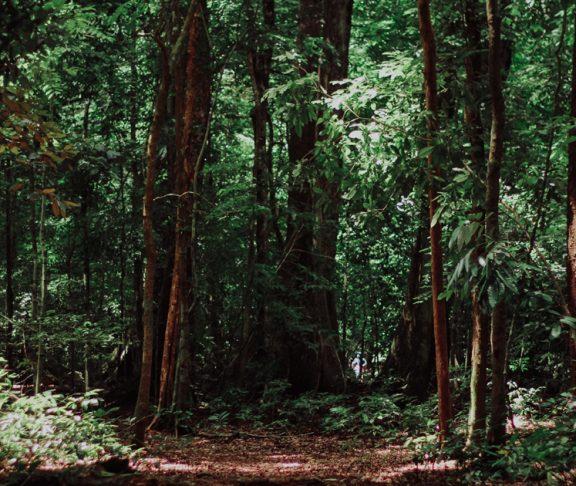 beskidzkie lasy