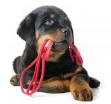 Black puppy
