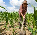 Warum ist Landwirt der wichtigste Beruf auf der Erde?