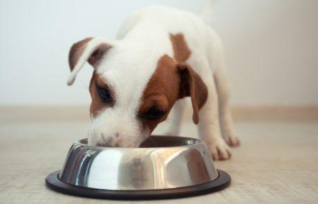 hund spiser