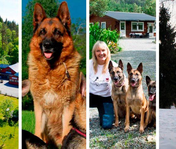 Ulike dyrehoteller og -pensjonater