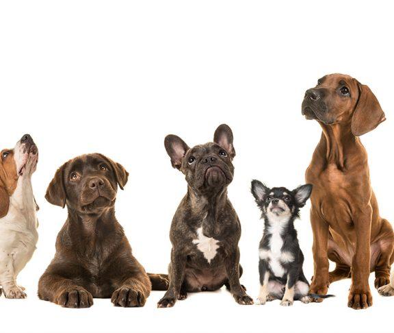 ulike hunderaser