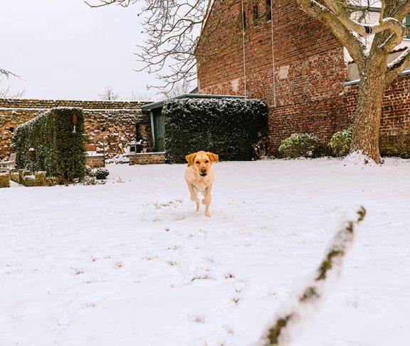 Hund i snø