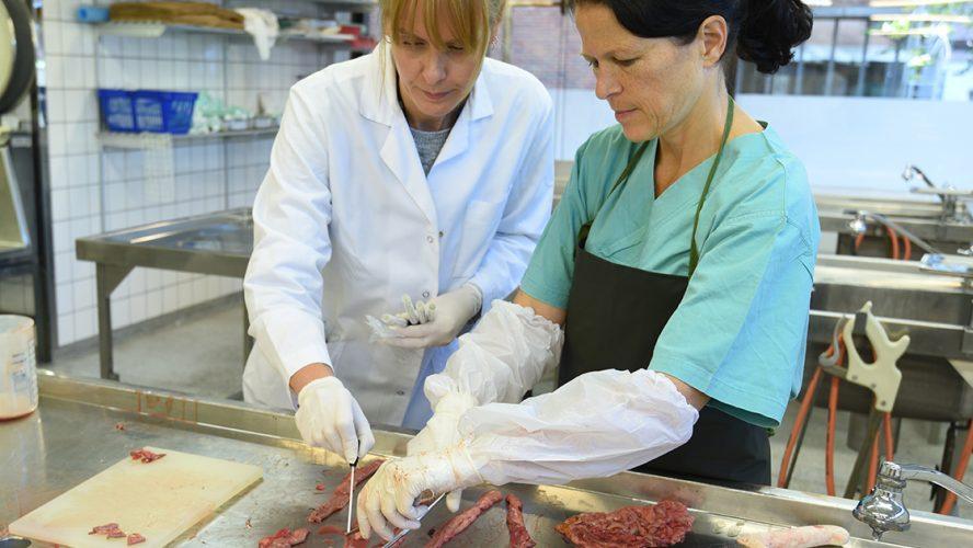 Veterinærer undersøker prøver