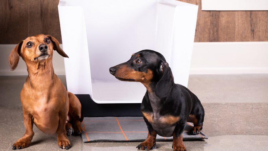 Doggy Bathroom